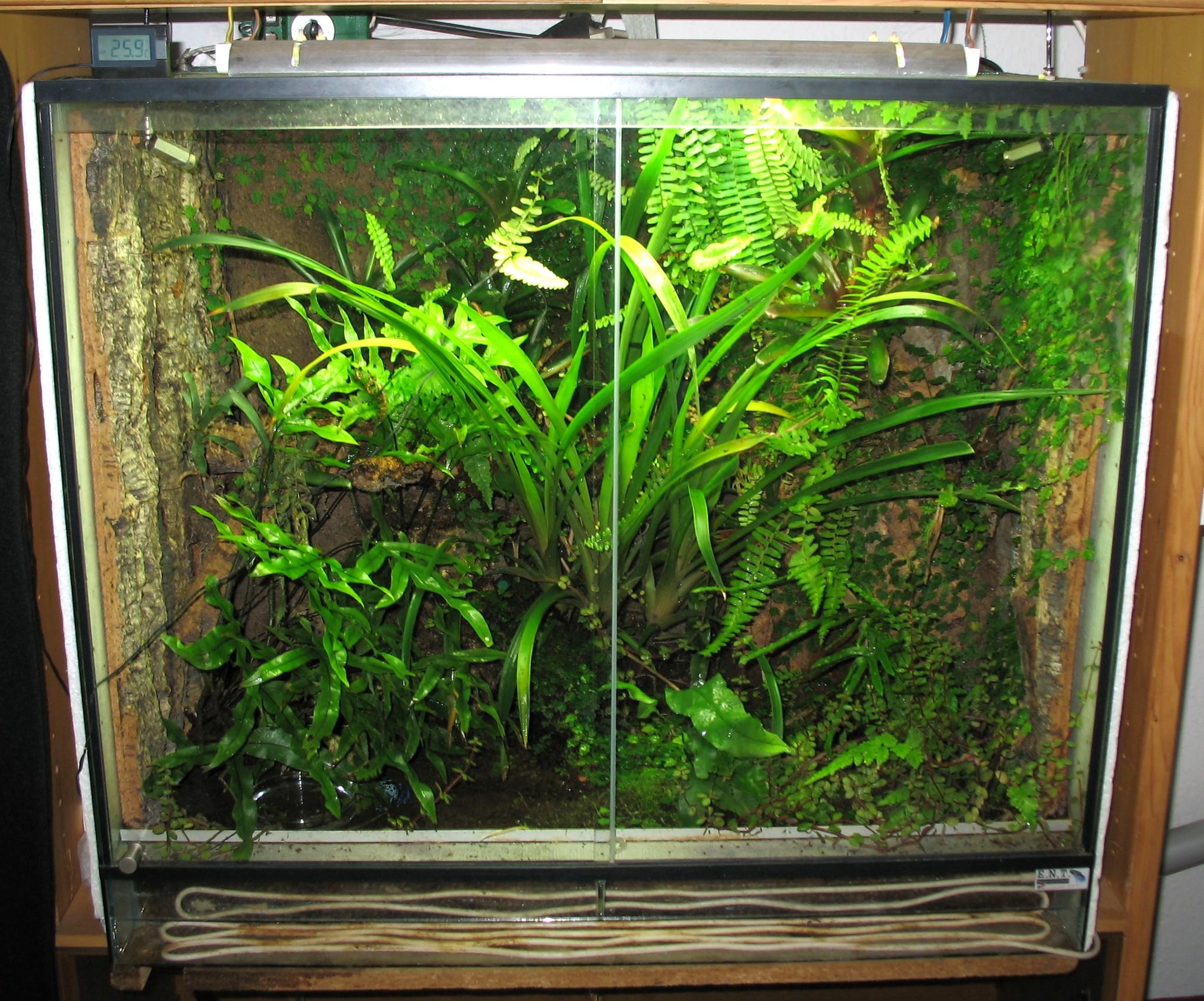 plantes terrarium tropical humide