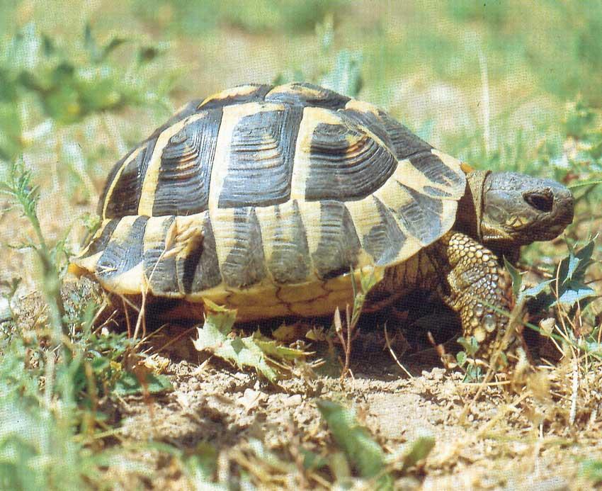 Portatout la ferme tropicale http www - Images tortue ...